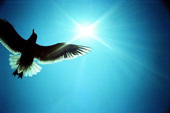 Libertad interior el blog de enriqueta olivari for La libertad interior libro